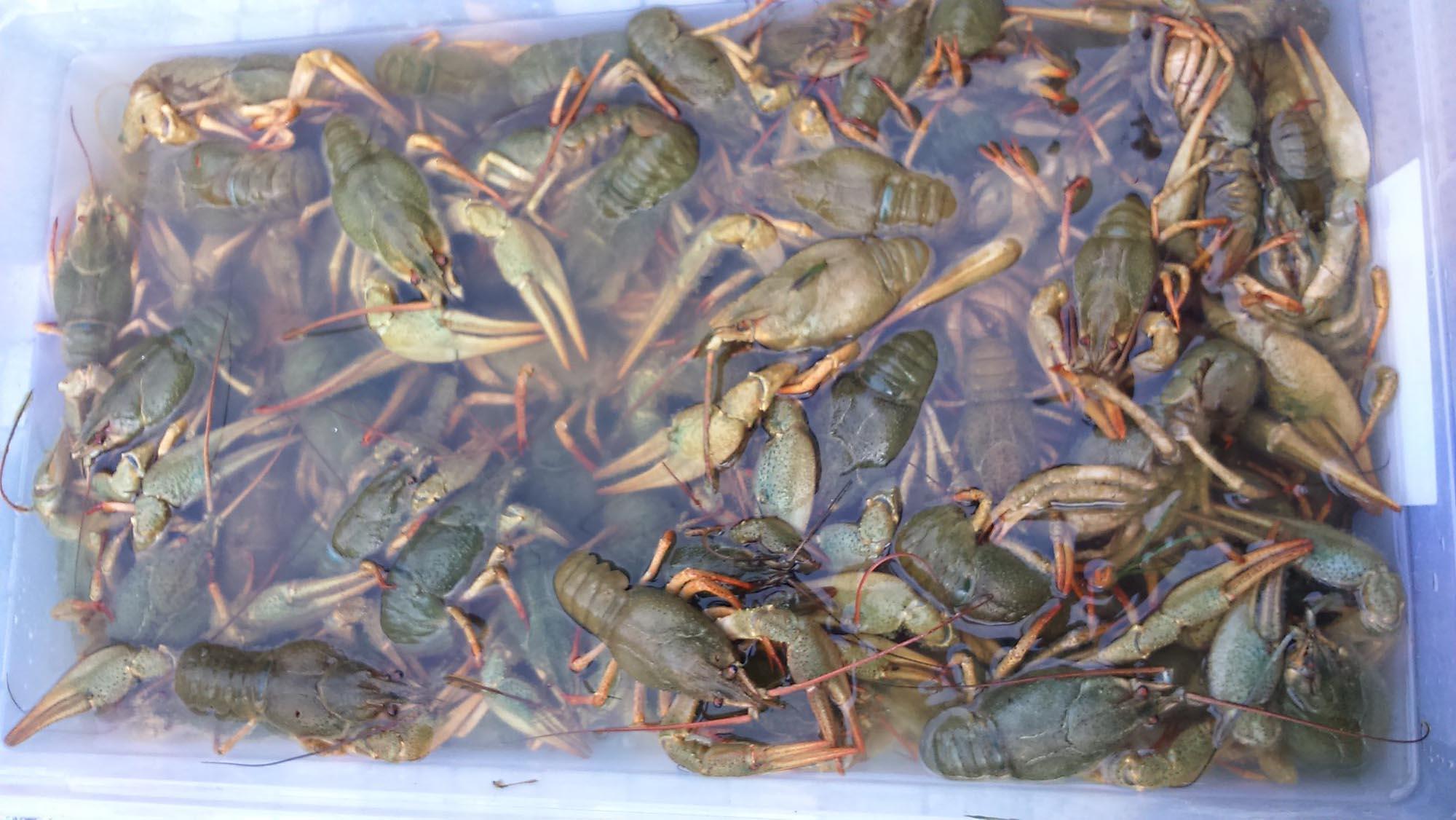 plat chalet Beaurivage - fruits de mer